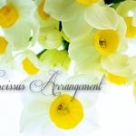 【簡単フラワーアレンジメントシリーズ】水仙をガラスの花器にいける他、楽しみ方いろいろ。